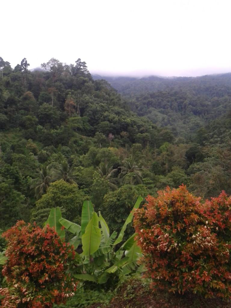 Lan Saka To gdzieś tu, nad dżunglą!