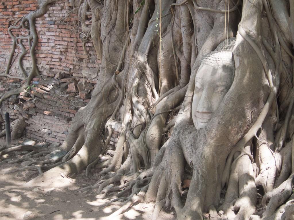 Najsłynniejsza głowa w Ayutthaya :)
