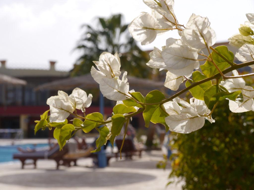 hotel blue reef egipt biuro podróży