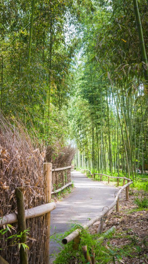 Bambusowy las w Kyoto (Japonia by Podróże Szczęściary)
