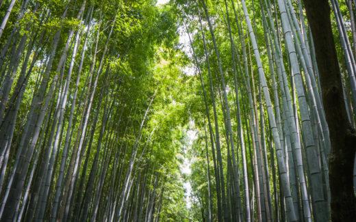 Arashiyama Kyoto (Japnia by Podróże Szczęściary) Bamboo forest